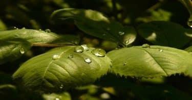 ما هو غذاء النباتات الخضراء