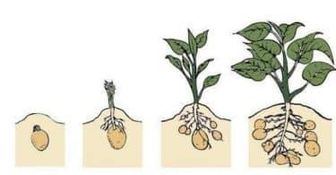 مراحل نمو النباتات بالصور