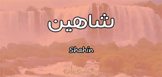 معنى اسم شاهين Shahin وصفات حامل الاسم