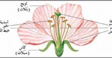 مكونات الزهرة الداخلية والخارجية
