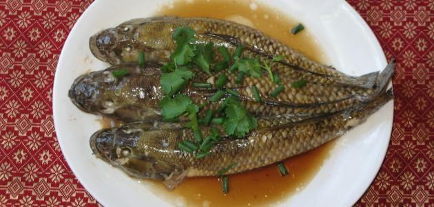 أسماك الباسا الفيتنامية