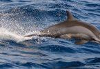 أين يعيش الدولفين والحوت