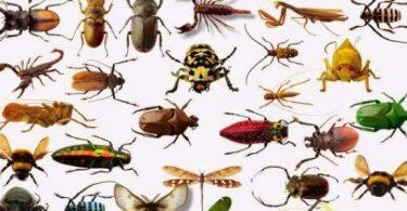 انواع حشرات المنزل واسمائها