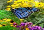 ما هو رمز الفراشة