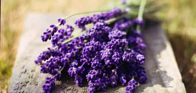 What is the benefit of lavender