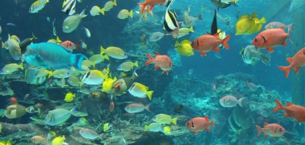 أنواع الأسماك واسمائها بالصور