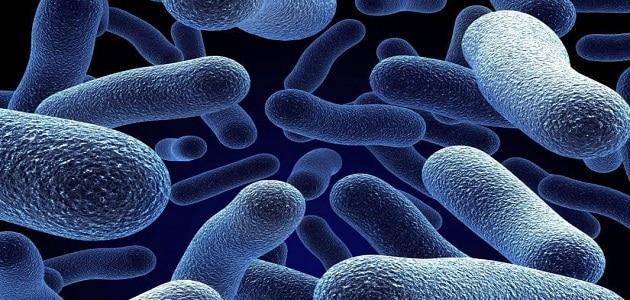 بحث عن البكتيريا مع المراجع