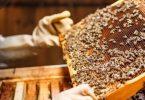 طرق تربية النحل بتونس