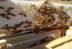 طرق تربية النحل في لبنان