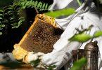 طريقة تربية النحل في ليبيا