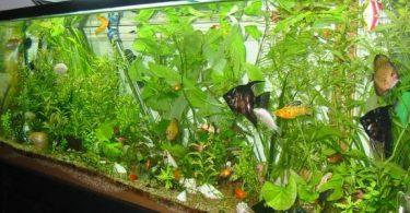 طريقة عمل حوض سمك الزينة