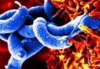 كيف يمكن للبدائيات والبكتيريا ان تكون نافعة للانسان