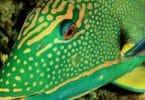كيف ينام السمك في الماء