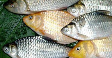 ماذا يغطي جسم السمكة وما أهميته