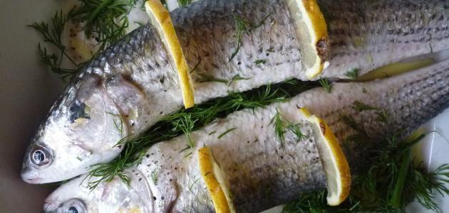 ماهي فوائد سمك البوري
