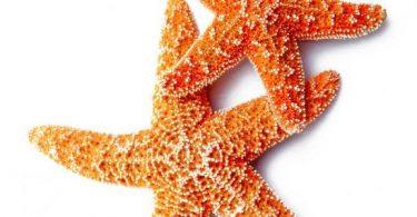 ما سبب تسمية نجم البحر بهذا الاسم