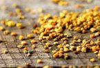 ما فوائد حبوب لقاح النحل