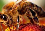 ما هو اسم صغار النحل