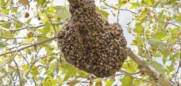ما هو الاسم الذي يطلق على بيت النحل