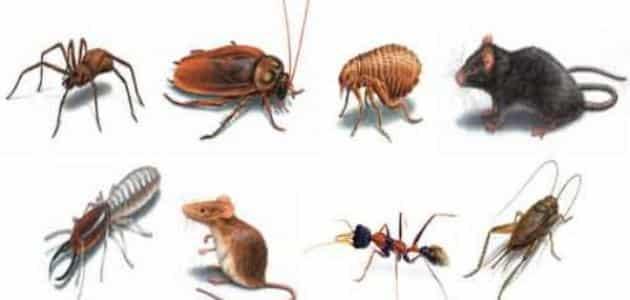 ما هو تعريف الحشرات