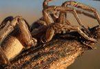 ما هو عدد أرجل العنكبوت
