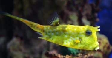 ما هي أجمل سمكة في العالم
