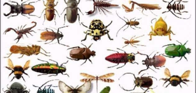 ما هي الحشرات المؤذيه والمسالمه