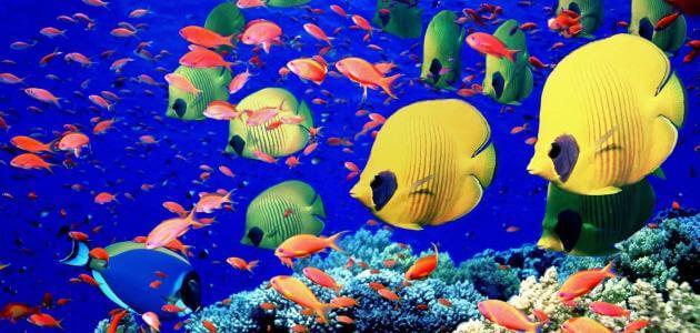 ما هي خصائص الأسماك