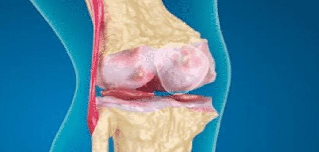 أهمية الغضاريف لعظام الجسم