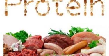 مصادر البروتينات