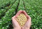 بحث عن الزراعة العضوية وأهميتها للإنسان