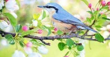 بحث عن الطيور وأنواعها