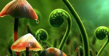 تركيب تجريبي لقياس النمو الطولي للنبات