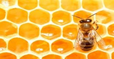 طريقة تربية النحل وإنتاج العسل