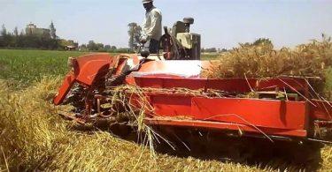 طريقة حصاد القمح