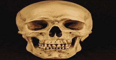 كم تبلغ عدد عظام الجمجمة