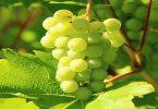 ما فوائد العنب الأخضر ؟