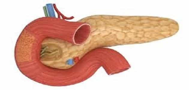ما هو مصدر الانسولين في الجسم
