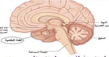 ما هي أعراض مرض الغدة النخامية ؟