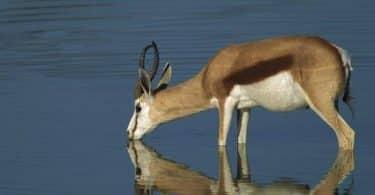 بحث عن أهمية الماء للكائنات الحية