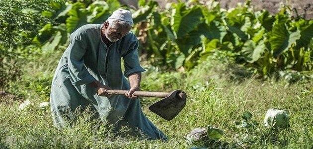 بحث عن الزراعة فى مصر