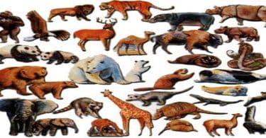 بحث عن عالم الحيوان كامل