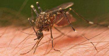 طرق انتقال الملاريا