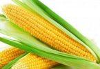 فوائد الذرة الصفراء للانسان