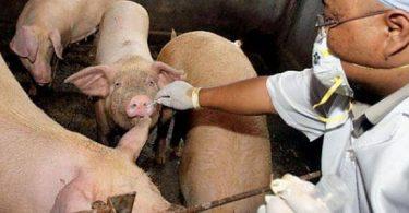 ما هو سبب انفلونزا الخنزير ؟