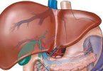 ما هي أعراض الإصابة بفيروس سي النشط ؟