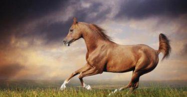 معلومات عن الحصان والفروسية
