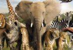 معلومات عن الحيوانات المفترسة والاليفة