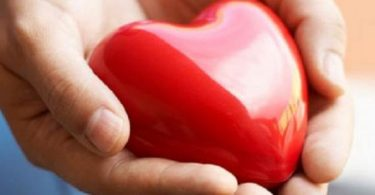 معلومات عن القلب وأهميته