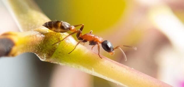 معلومات عن النمل وحياته